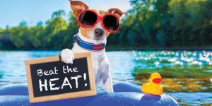 How to beat the heat in Brisbane this summer